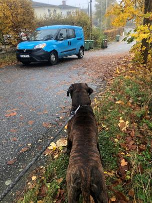 En bild som visar hund, utomhus, träd  Automatiskt genererad beskrivning